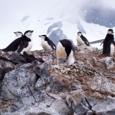 Antarctique2006-0031