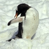 Antarctique2006-0071