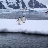 Antarctique2006-008