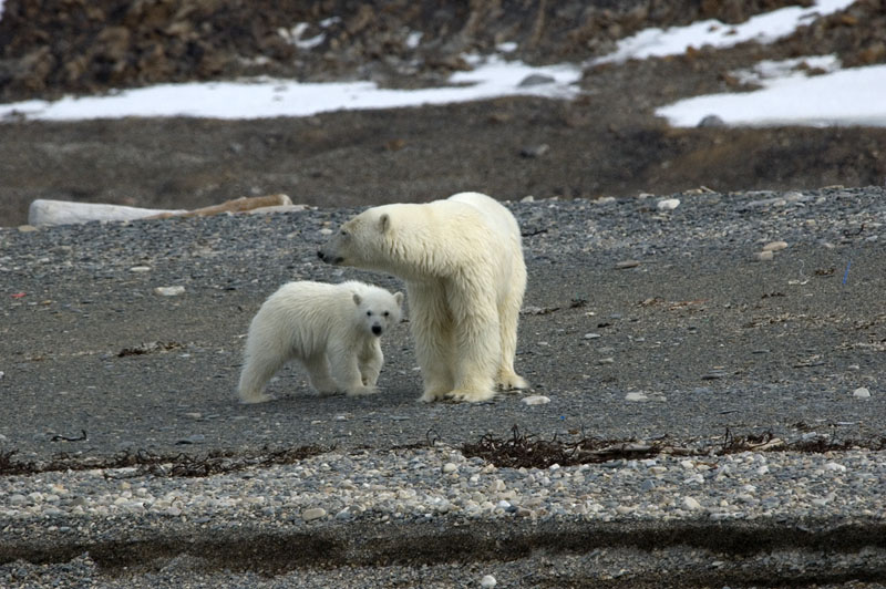 adult female and cub on shore800