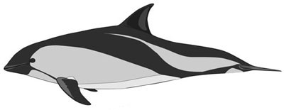 Size-peale-dolphin400
